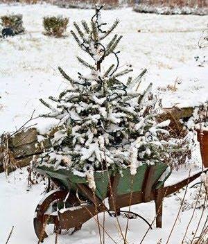 Jul bhg 1